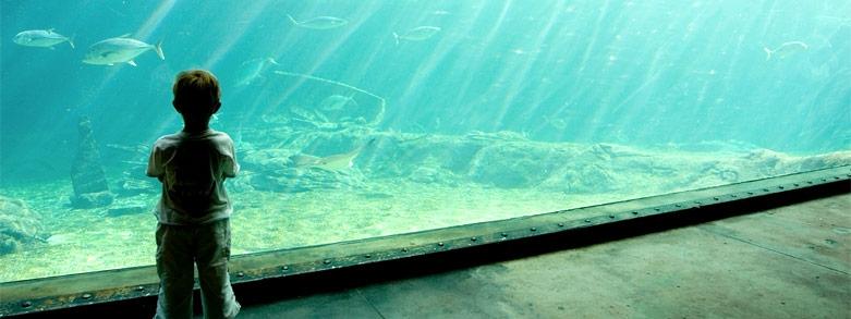Akvarium och fiskar kan sänka blodtrycket